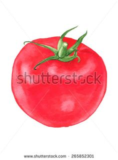 Red tomato. Watercolor. vector