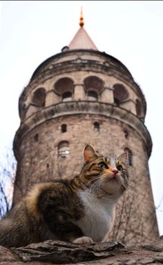 cats of Istanbul 😄 Crazy Cats, Big Cats, Cats And Kittens, Cool Cats, Animals And Pets, Cute Animals, Cat Boarding, Tier Fotos, Beautiful Cats