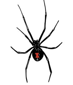 Black Widow – Black Widow Spiders Facts and Fallacies - http://wolfspider.org/black-widow/