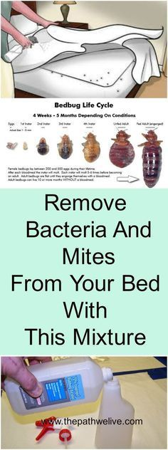 Remove Bacteria And Mites From Your Bed With This Mixture Bed Bug Remedies, Home Remedies, Rid Of Bed Bugs, Bed Bug Bites, Homemade Cleaning Products, Natural Cleaners, Holistic Remedies, Health Facts, Cleaning Hacks