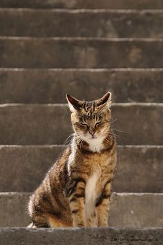 Cats+in+Hong+Kong+by+Micros+Yip+on+500px