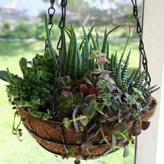 Cestas colgantes | Cuidar de tus plantas es facilisimo.com
