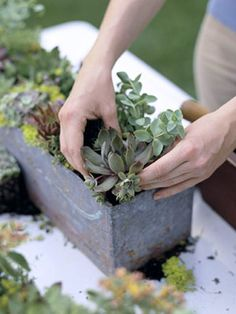 So-Easy Succulent Container Gardens  Succulents make excellent container plants because they're easy to grow and need almost no care. Check out our 14 ideas for succulent containers.