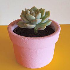 Já que a vibe por aqui é de flor Família Barros rosa!  #oitominhocas #suculentas #suculovers #familiabarros #decoração #decoraçãocriativa #maisverde #plantinhasemcasa #elo7br