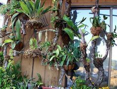 care of orchids as houseplants Orchids Garden, Orchid Plants, Air Plants, Garden Plants, Indoor Plants, Growing Orchids, Growing Plants, Bonsai, Garden Art