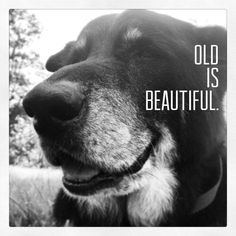 The old have  greater wisdom and strength, beauty in their years...