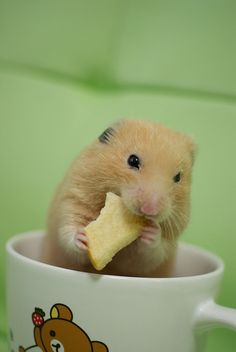 Hamster by nkgws, via Flickr  I know he's a hammie but he goes w/my mice