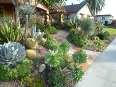 The New Normal for Many Property Owners Hardy Succulents and Cacti are becoming more popular front yard options during the drought.Hardy Succulents and Cacti are becoming more popular front yard options during the drought. Succulent Landscaping, Succulent Gardening, Landscaping With Rocks, Landscaping Plants, Cacti And Succulents, Front Yard Landscaping, Planting Succulents, Landscaping Ideas, Cactus Plants