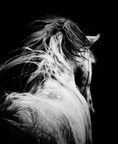 HORSE - B & W