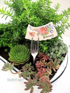 Love this little rosemary and succulents garden. Bluebird Notes