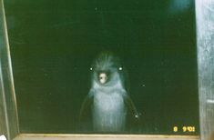 """Creepy Dolphin Is Creepy - Funny memes that """"GET IT"""" and want you to too. Get the latest funniest memes and keep up what is going on in the meme-o-sphere. Lps, Dolphin Memes, Dolphin Photos, Creepy Images, Flipper, Horror, Funny Memes, Hilarious, It's Funny"""