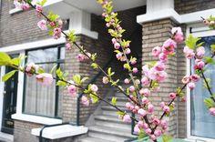 Te koop in Den Haag. Ruim appartement van 85 m² Vanafprijs € 99.000 euro k.k. http://www.deduurzamemakelaar.nl/woning/1678/omschrijving/vreeswijkstraat_391_a_in_den_haag.aspx