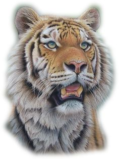 Portrait of male Siberian tiger by Eric Wilson Wildlife Paintings, Wildlife Art, Animal Paintings, Animal Drawings, Pastel Paintings, Big Cats Art, Cat Art, Animals Beautiful, Cute Animals