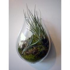Air Plant - I have one of these. So easy to care for and so cool looking.