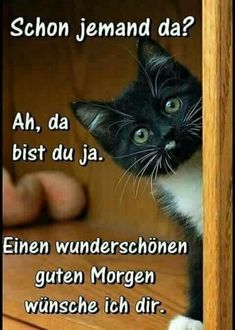 Good morning - funny, meaningful and sweet pictures to cheer up - süß - Humor Funny Good Morning Quotes, Morning Humor, Morning Sayings, Good Morning Picture, Morning Pictures, Funny Animal Quotes, Funny Animals, Animal Humor, Cat Quotes