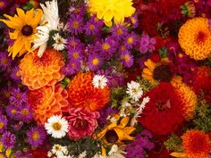 красивые обои для рабочего стола весна цветы