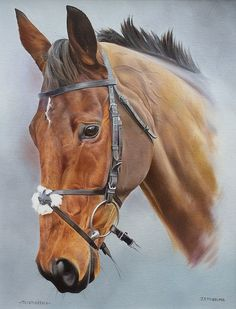 Thistlecrack Head Study by Joanna Stribbling. Original Artwork, Original Paintings, Horse Racing, Race Horses, Horse Head, Horse Horse, Equestrian, The Originals, Artist
