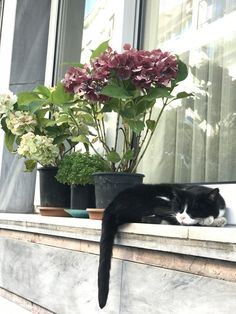 Bed is comfortable but windowsill better Animals And Pets, Cute Animals, Cat Site, Cat Window, Cat Watch, Paws And Claws, All About Cats, Cat Sleeping, White Cats