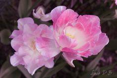 My Woodland Garden: Pink&Pretty