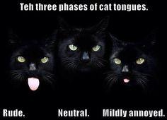 Teh three phases of cat tongues http://cheezburger.com/9007990784