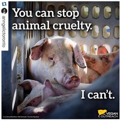 you can stop financing animal cruelty by going vegan Animal Cruelty Quotes, Stop Animal Cruelty, Animal Testing, Animal Quotes, Vegan Animals, Farm Animals, Toronto, Animal Agriculture, Why Vegan