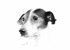 sketches of animal wallpapers dog