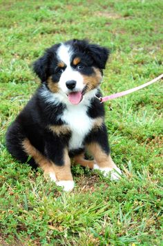This is A Berner!