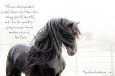 horse pictures with quotes   Royal Grove Stables Blog: INSPIRATIONAL HORSE QUOTES