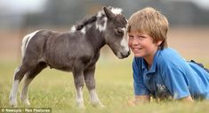 Such an adorable newborn mini horse!