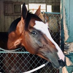 The Belmont Stakes, Horse Racing, Race Horses, Thoroughbred, Kentucky Derby, Stables, Bays, Animals, Beauty