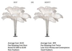 Renting ostrich feathers is a common mistake. Here are 4 reasons that you should not.