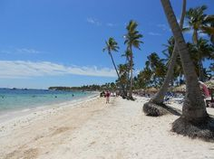 Wedding Dreams Palm Beach Review Of Punta Cana Dominican Republic Tripadvisor