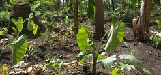 Permaculture and the myth of overpopulation