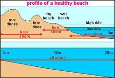 img: Features of a beach  oceanography:dunes and beaches