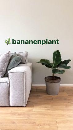 Home / Bananenplant
