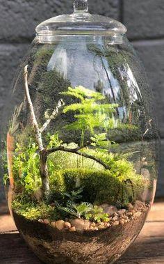 Inspiring Bonsai Terrarium Jars Design Ideas To Try , . Inspiring Bonsai Terrarium Jars Design Ideas To Try , Inspiring Bonsai Terrarium Jars Design Ideas To Try , Video: