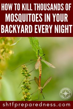 Not only are mosquitoes one of the most annoying things in the world they are also carriers of incredibly dangerous diseases. Kill them with this method! Annoying Things, Mosquitoes, Zombie Apocalypse, Simple Living, Permaculture, Compost, Homesteading, Survival, Backyard