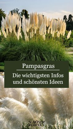 Back Gardens, Small Gardens, Outdoor Gardens, Delphiniums, Gladioli, Real Plants, Hydroponic Gardening, Pampas Grass, Amazing Gardens