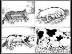 Macht Milch krank? Viele Menschen konsumieren immer noch große Mengen an Milch bzw. Milchprodukten und denken sie tun Ihren Körper etwas gutes. Dabei bezweifeln mittlerweile sogar immer mehr Wissenschaftler den positiven Effekt von Milch. Und mehr noch, Milch soll verantwortlich für viele Krankheiten sein und sogar verschiedene Krebsarten hervorrufen bzw. begünstigen.   http://die-gesundheit.blogspot.de/2015/02/milch-kann-krank-machen.html