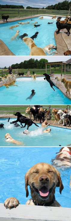 Doggy pool party just might be the happiest thing in the world