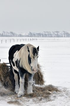 Horse in the snow by Martijn Nijenhuis on Flickr.