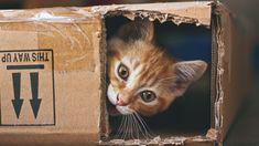 Alle Katzenbesitzer können es bestätigen: Unsere Samtpfoten lieben es, in Kartons zu klettern. Doch woher kommt das? Wissenschaftler scheinen nun die Antwort darauf gefunden zu haben.