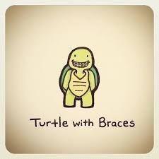 Turtle with Braces Sweet Turtles, Cute Turtles, Baby Turtles, Cute Turtle Drawings, Cute Animal Drawings, Cute Drawings, Kawaii Drawings, Turtle Meme, Cartoon Turtle