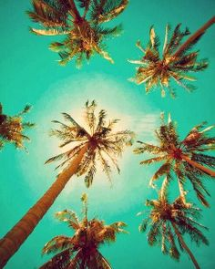 7 Palm Sky