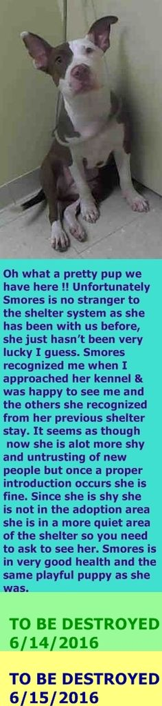 SAFE 6-15-2016 by Rebound Hounds  --- RETURN 05/28/16 MOVEPRIVA --- SAFE 9-28-2015 --- Staten Island Center PRINCESS – A1051098 FEMALE, BROWN / WHITE, PIT BULL MIX, 6 mos OWNER SUR – EVALUATE, NO HOLD Reason MOVE2PRIVA Intake condition EXAM REQ Intake Date 09/11/2015 http://nycdogs.urgentpodr.org/2015/09/princess-a1051098/