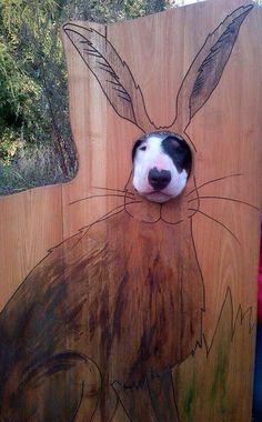 Bunny bully