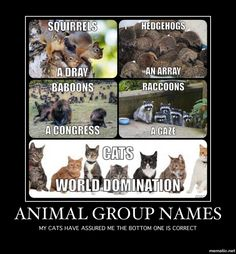 Animal Group Names Http Sulia Com My_thoughts Cc Cba