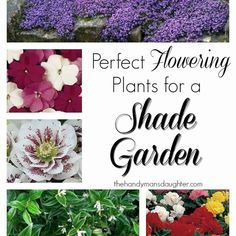 Finding pretty plants that flourish in the shade can be quite a challenge! Here's a handy list of flowers and plants that will thrive in your shade garden.