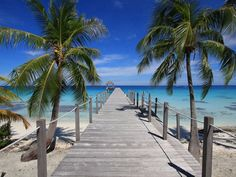 Pier and palms, Fakarava, French Polynesia:   images are part of our Free Wallpaper and Free Screensavers