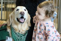 A Therapy Dog sharing some love at the hospital.